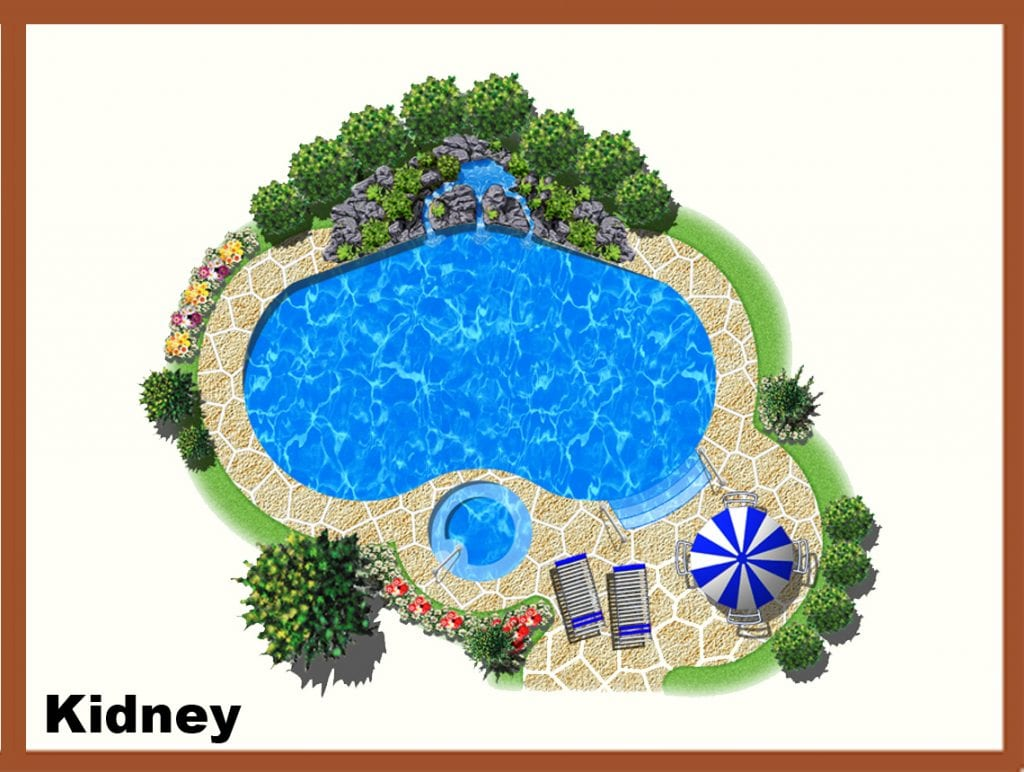 Kidney
